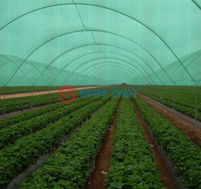 Mẫu nhà lưới nông nghiệp