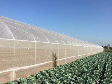 Thiết kế thi công mẫu nhà lưới nông nghiệp tại Lâm Đồng