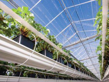 Thiết kế thi công mô hình nhà lưới mini trồng rau năm 2021