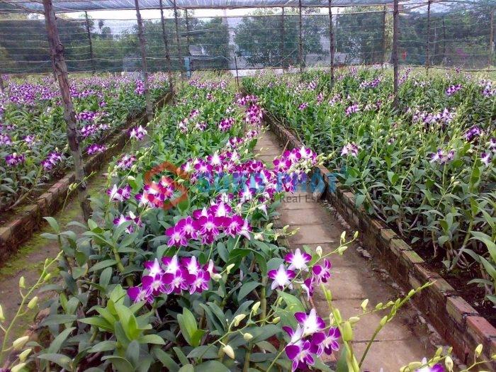 kỹ thuật thi công nhà lưới trồng lan