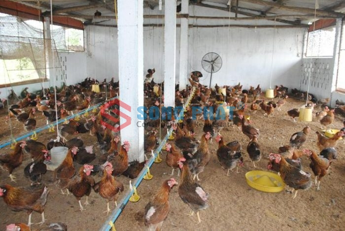 thi công xây dựng chuông trại chăn nuôi gà