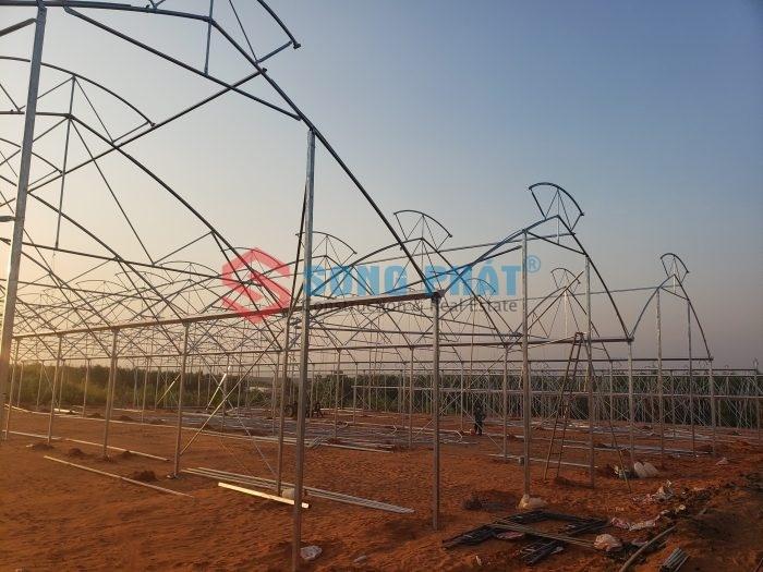 Giới thiệu mô hình nhà kính trồng rau nhiệt đới tại Việt Nam