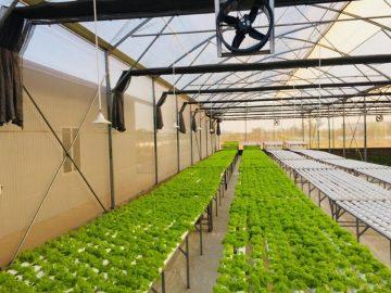 Tư vấn thiết kế thi công nhà kính mái vòm nông nghiệp