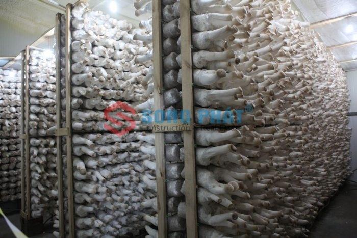 thi công nhà xưởng trồng nấm